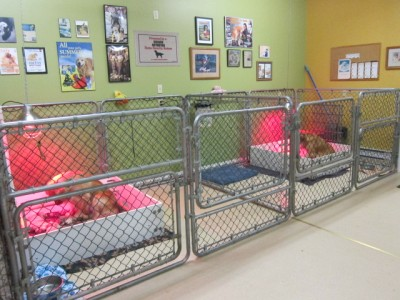 Setherwood Golden Retrievers - Information - Facilities